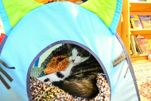 Henry the cat sleeps on a bed of warm blankets made by Stephaniejo. (photo by Vintage Books)