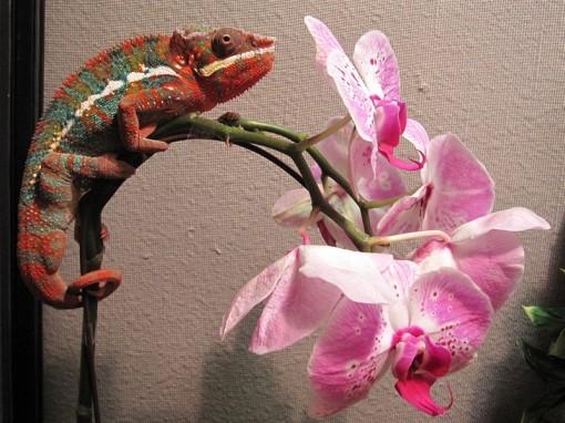 Lizards~2