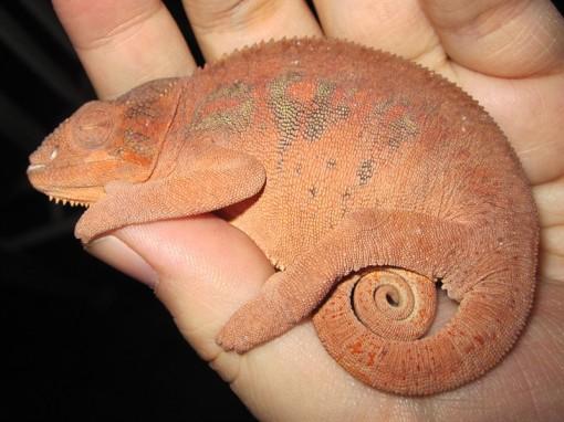 Lizards~3